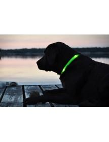 Coleira de Cão LED